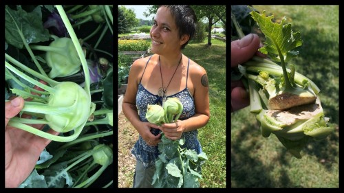 The tasty mini-cabbage that I eat like an apple. Mmmmcrunch! Don't be afraid to try Kohlrabi!