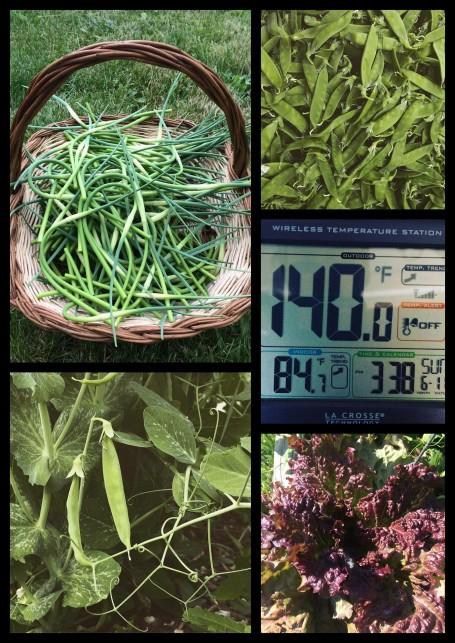 market 2 promo collage.jpg